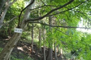 広葉樹シンポジウム・啓発の森見学ツアー②
